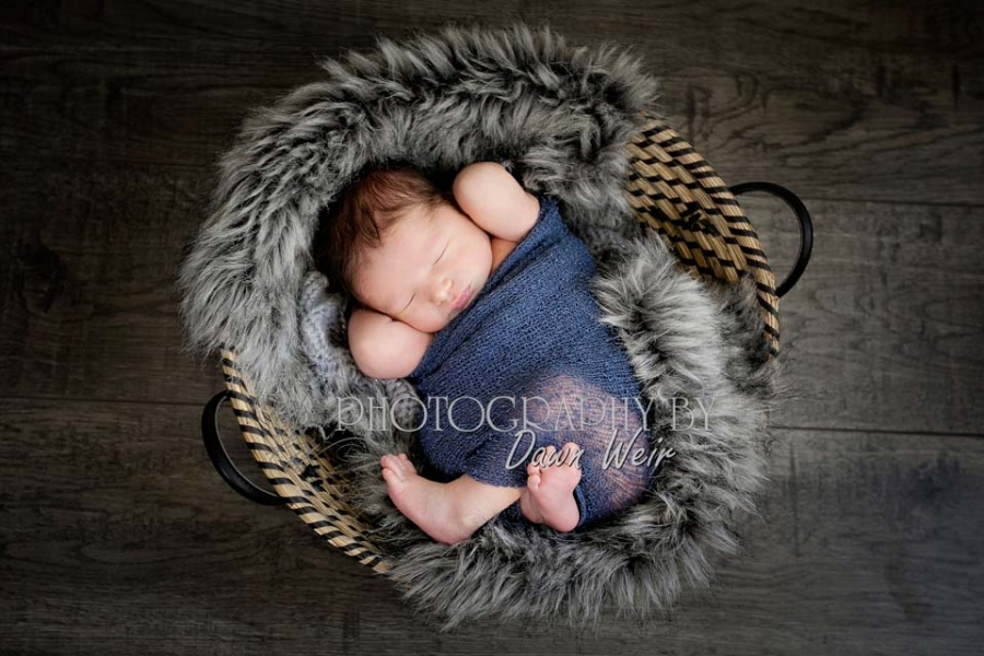 st albert newborn photographer