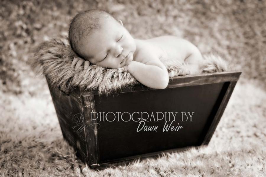 st albert newborn photographer