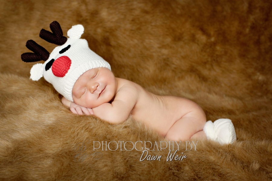 st albert newborn photography