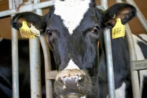dairy farm photographer edmonton alberta
