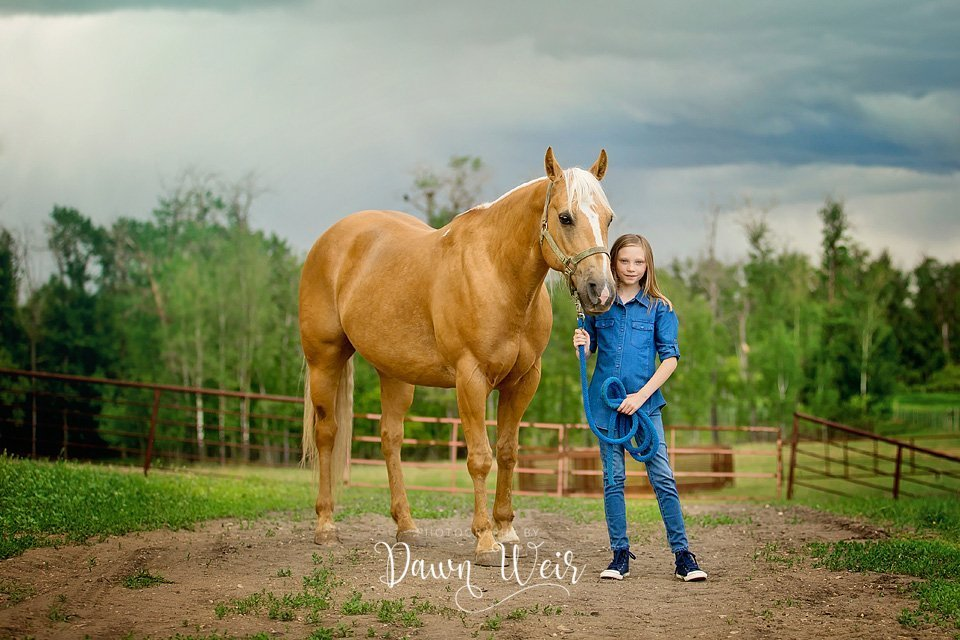 st albert farm family photographer