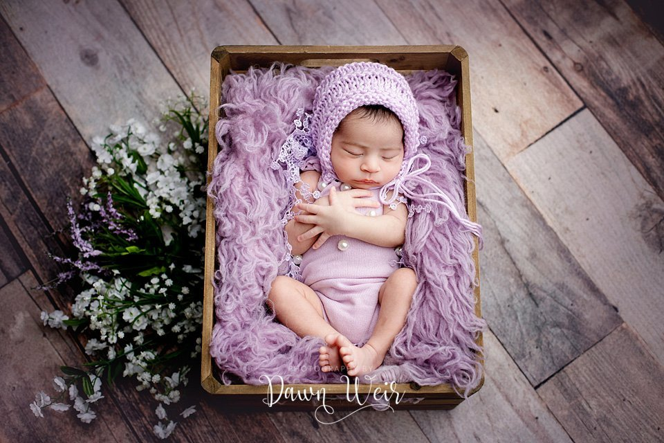st albert baby photographer dawn weir
