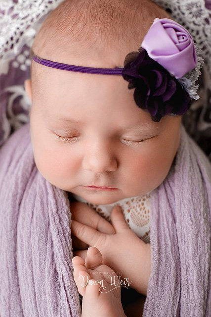 photo by dawn weir purple and cream flowers with newborn in bucket