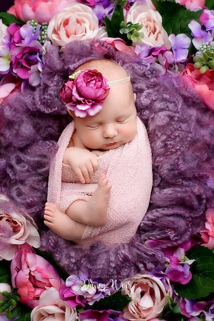 photo by dawn weir purple and cream flowers with newborn lying in flowers