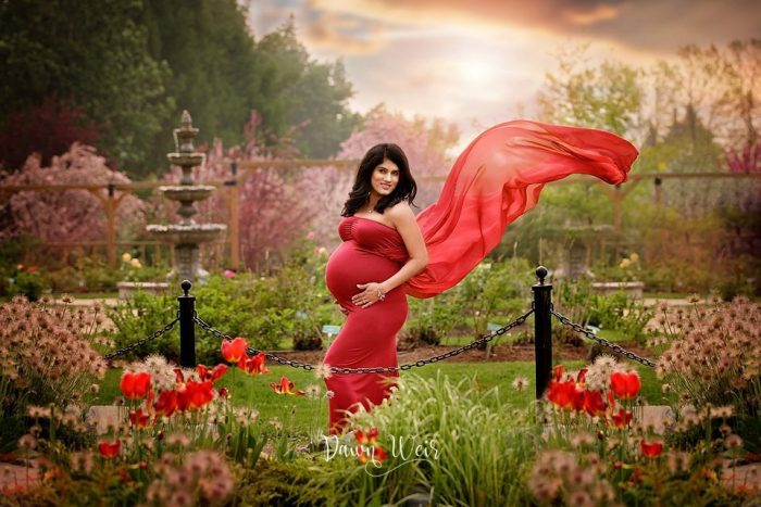 st albert botanic park maternity photo session pink choke cherry blossoms photographer dawn weir